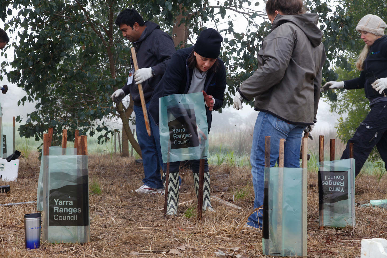 Corporate Social Responsibility-TreePlanting